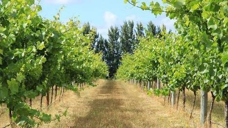 'This is serious', wine industry says of its lack of data | Year 12 Geography | Scoop.it