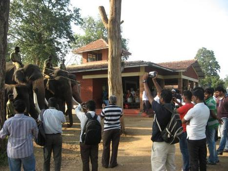 Tourists back on prowl at Mudumalai Tiger Reserve | Tourism Social Media | Scoop.it