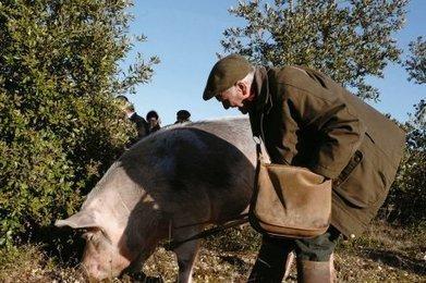 La truffe en fête | Agriculture en Dordogne | Scoop.it