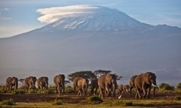 #Tanzania #elephant population declined by 60% in five years, census reveals | Messenger for mother Earth | Scoop.it