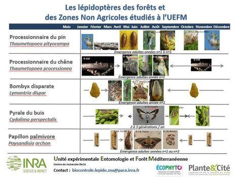 Les lépidoptères des forêts et des Zones Non Agricoles (ZNA)   Nature, société et développement   Scoop.it