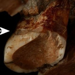 Neanderthal used toothpicks to mitigate pain – Archaeology News... | Archaeology News | Scoop.it