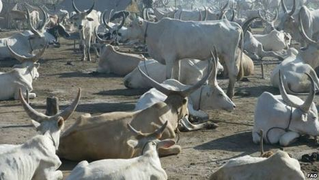 S. Sudan Conflict Displacing Livestock - Voice of America | Tannery | Scoop.it