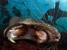 Cape Fur Seal Picture -- Animal Wallpaper -- National Geographic Photo of the Day | Primary School Teaching | Scoop.it