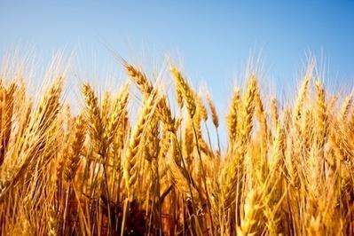 Rising CO2 poses significant threat to human nutrition   Nourrir la planète... autrement   Scoop.it