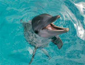 Dolphins appear to do nonlinear mathematics | Social Foraging | Scoop.it
