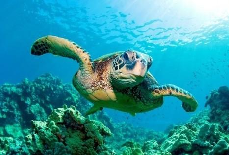 Researchers plea for long-term ocean acidification research | Amocean OceanScoops | Scoop.it