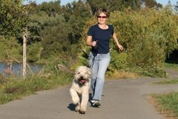 Bloat: The Tale of the Twisted Stomach | PetSafe Blog | Trends | Scoop.it