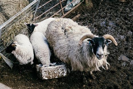Flotter Dreier auf den Schafsinseln : Martin Hülle :: Fotografie & Text :: Outdoor & Expeditionen | Natur & Landschaft | Reise & Reportage – Blog | Die Fuji X-Pro1, XE-1, X100, X100s, X-M1, X-A1 sprechen Deutsch | Scoop.it