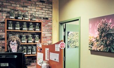 Cannabis: Colorado's budding new industry | Drugs, Society, Human Rights & Justice | Scoop.it
