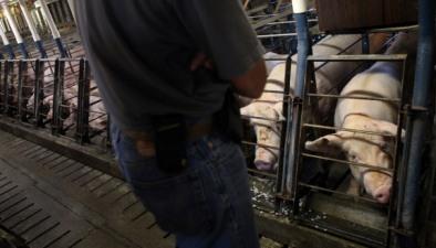 Animal welfare: Humane society files complaint against Smithfield Foods   Animal Cruelty   Scoop.it