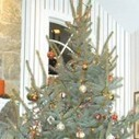 Hurricane Sandy provides Christmas tree for Ridgefield, NJ Family   Christmas Trees and More   Scoop.it