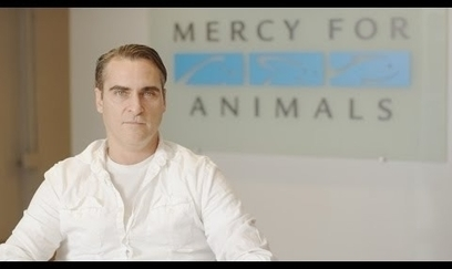 Tell Walmart to Stop Torturing Mother Pigs. Sign Joaquin Phoenix's petition! | Science and Technology Today | Scoop.it