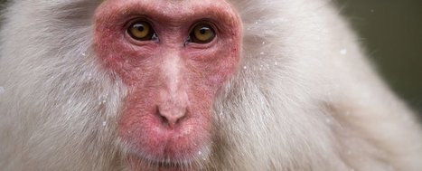 Scientists just used stem cells from one monkey to heal the hearts of five others   The future of medicine and health   Scoop.it