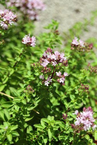 Huerto Familiar – Tres cultivos que se pueden sembrar en Abril ... | Horticultura | Scoop.it