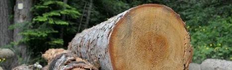 Pourquoi choisir le chauffage au bois ? | Conseil construction de maison | Scoop.it