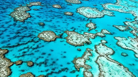 Aussie Scientists Find New Reef Behind The Great Barrier Reef | Daily News Reads | Scoop.it