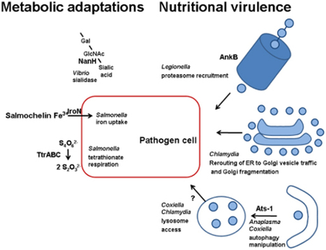 Microbial quest for food in vivo: 'Nutritional virulence' as an emerging paradigm   Intracellular pathogenic bacteria   Scoop.it
