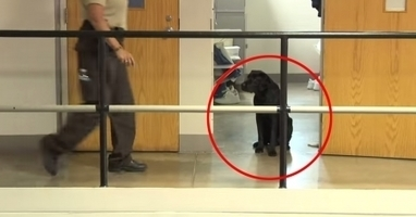 Look at the inmate's act for the dog put in his cell, you will be shocked! | Dog Lovers | Scoop.it