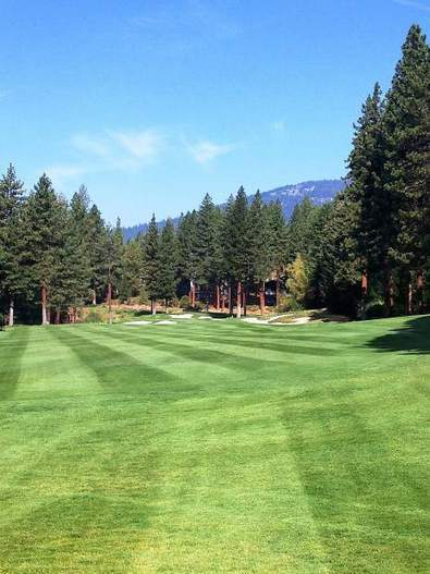 Maintaining your lawn, grass areas - Tahoe Daily Tribune | Turf Maintenance | Scoop.it
