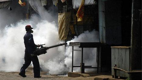 México: cambio climático amenaza con disparar el dengue | Educacion, ecologia y TIC | Scoop.it
