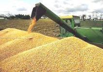Argentina: Los fletes representan un tercio del precio del maiz | Maíz | Scoop.it