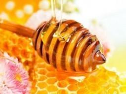 10 Resep Minuman Sehat Dengan Madu Sebagai Pemanis dan Penambah Rasa   MauOrder.Com   Peluang Usaha 2013   Scoop.it