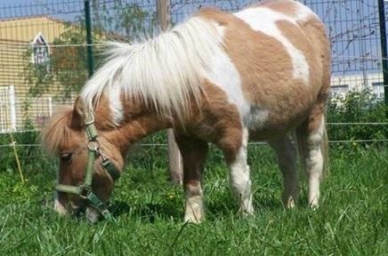 MARGUERITTES. Trois poneys volés retrouvés grâce à un message ... - Objectif Gard   Cheval Orne   Scoop.it