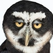Oddball photographs capture the facial expressions of animals | Cooperando | Scoop.it