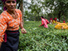Why women should own their land   Women's Rights   Scoop.it