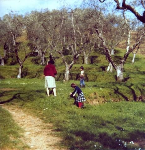 Asparagi | Italian Language Blog | Italiano LS | Scoop.it