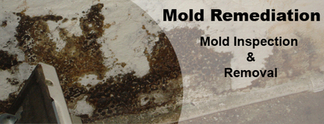 Clearing mold problems from the buildings to create better environment | Water Damage Restoration | Scoop.it