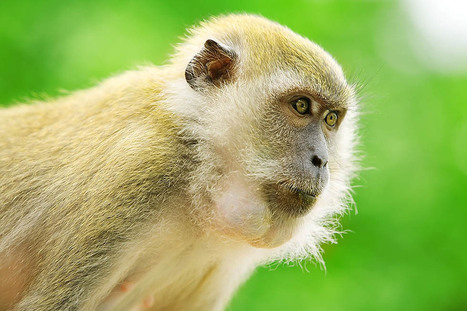 Pangkor monkeys - Ben Heys Artistic Photography | Photography articles | Scoop.it