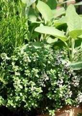 Herb Garden on the Balcony - LifeStyle HOME | Home and Lifestyle | Scoop.it