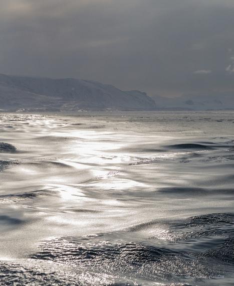Austfjorden... suite #Spitzberg #Svalbard superbe mer entre liquide et solide #pancake #Arctique | Arctique et Antarctique | Scoop.it