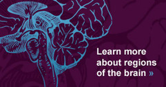How'd I Get a Brain - BrainFacts.org | Learning, Brain & Cognitive Fitness | Scoop.it