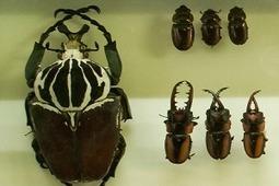 Un paseo por los museos virtuales de ciencias naturales | Enseñar y aprender en nivel Primaria | Scoop.it