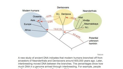 A chart that sums up who had sex with whom during the Pleistocene | Strange days indeed... | Scoop.it