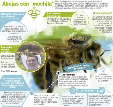 Abejas con 'mochila' / Infografías / Multimedia / SINC | Apasionadas por la salud y lo natural | Scoop.it