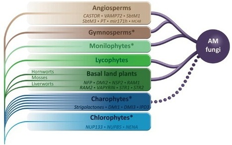 Trends in Plant Science: Evolution of the plant–microbe symbiotic 'toolkit' (2013) | Education | Scoop.it