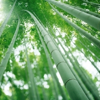 Is bamboo a solution for mainstream construction? | Bamboo | Scoop.it