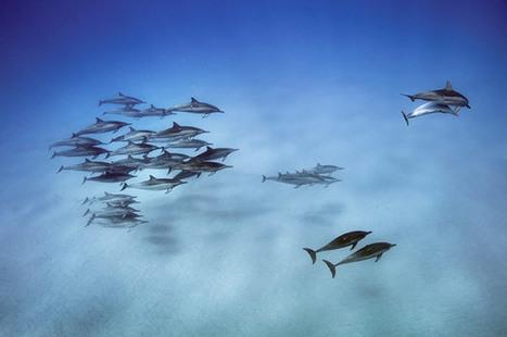 Dolphin Intelligence | Biodiversity protection | Scoop.it