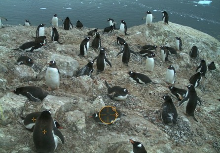 Help Scientists By Marking Penguins In Pictures | ScienceNow | Scoop.it