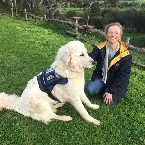 Maremma sheepdogs guarding endangered marsupials back into existence | Alpha-Gal | Scoop.it