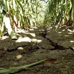 Drought worsens in U.S. farm states-climatologists | Climate Chaos News | Scoop.it