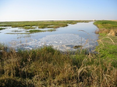 Conservation Program Has Restored One Fourth of CA Wetlands - The Sacramento Bee   100 Acre Wood   Scoop.it