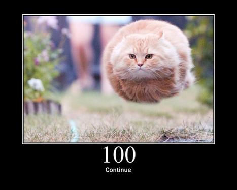 HTTP Status Cats API | Veille SEO - Référencement web - Sémantique | Scoop.it