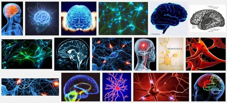 Amazing Science: Neuroscience Postings | psychology | Scoop.it