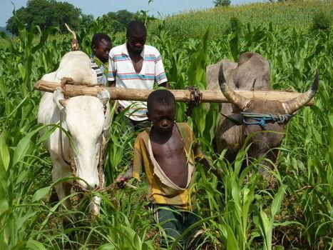 La sécurité alimentaire de l'Afrique passe par l'agriculture familiale | Questions de développement ... | Scoop.it