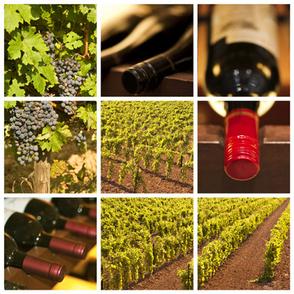 Emploi production et qualité agroalimentaire, vins et spiritueux - Liste Vin | Oenotourisme | Scoop.it